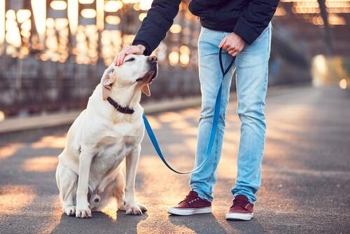 ¿Cómo escoger al mejor cuidador para tu perro?