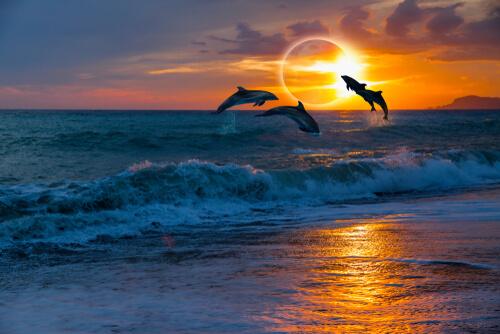 Animales en los eclipses.