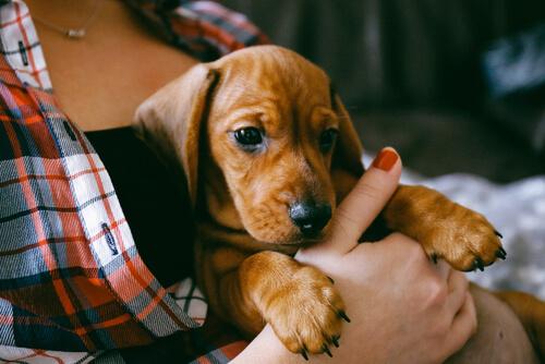Educación básica que debes dar a un cachorro