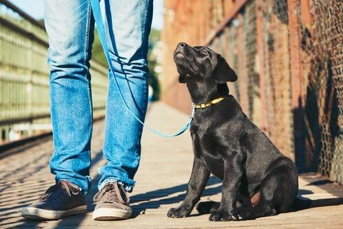 Educación canina para principiantes: 5 pasos