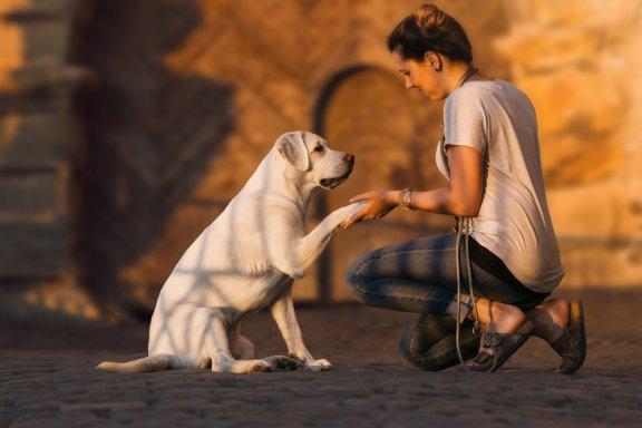 Если моя собака глухая, как я могу обучить его?