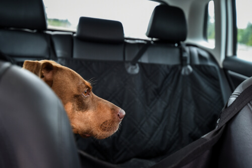 Funda de asiento para coche y perro
