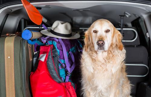 Авто чехлы для собак