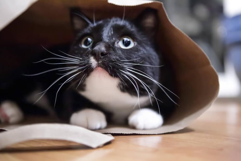 Какие усы у кошек?