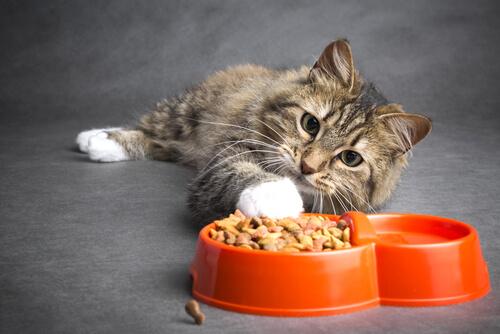 ¿Cómo alimentar a un gato con cáncer?