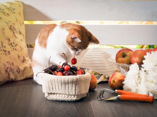 Gato mirando las frutas.