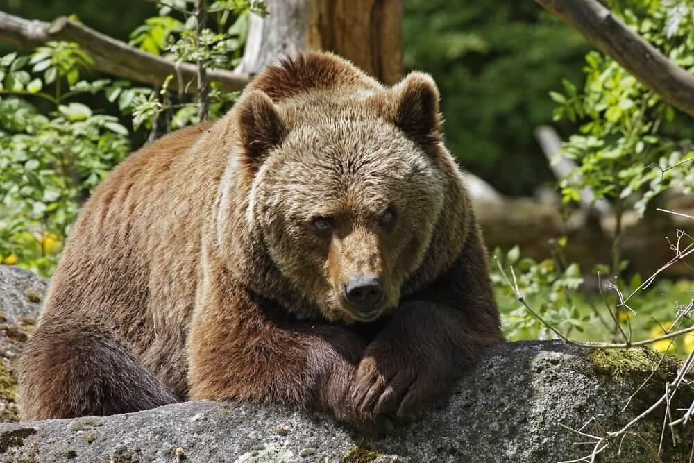 Hábitat de los osos.