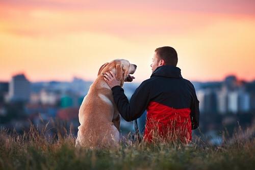 3 historias tiernas de animales con personas