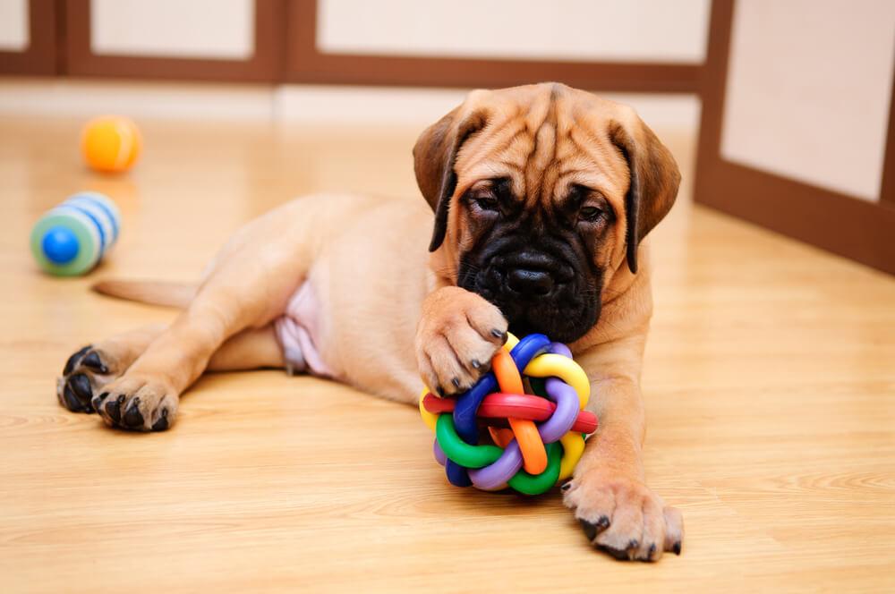 Jugar con tu perro en casa.