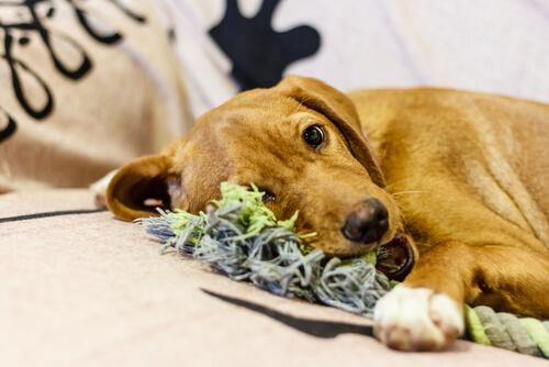 7 pasos para hacer juguetes para tu mascota
