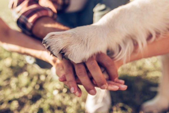 Какая была первая домашняя собака?
