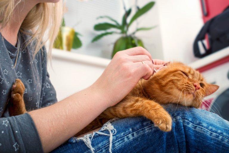 ¿Cómo hacer que tu gato sea cariñoso?