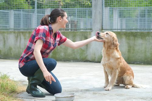 Si no puedes adoptar, aún puedes ayudar