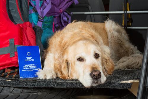 Normativa legal para viajar con perros en coche