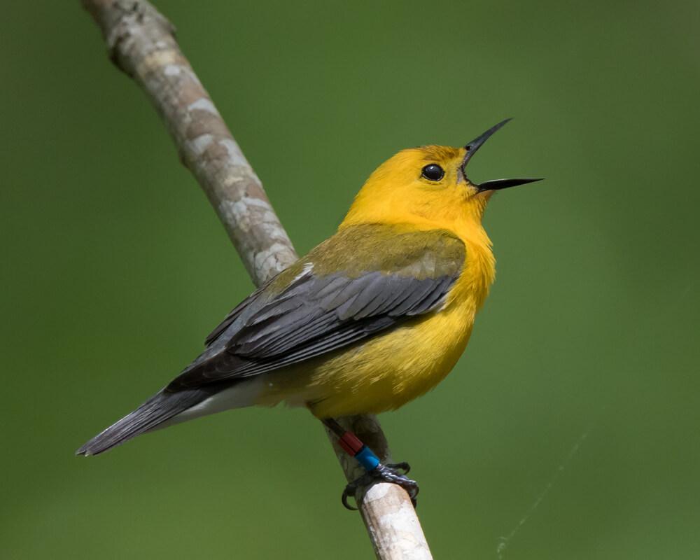 6 tipos de pájaros cantores