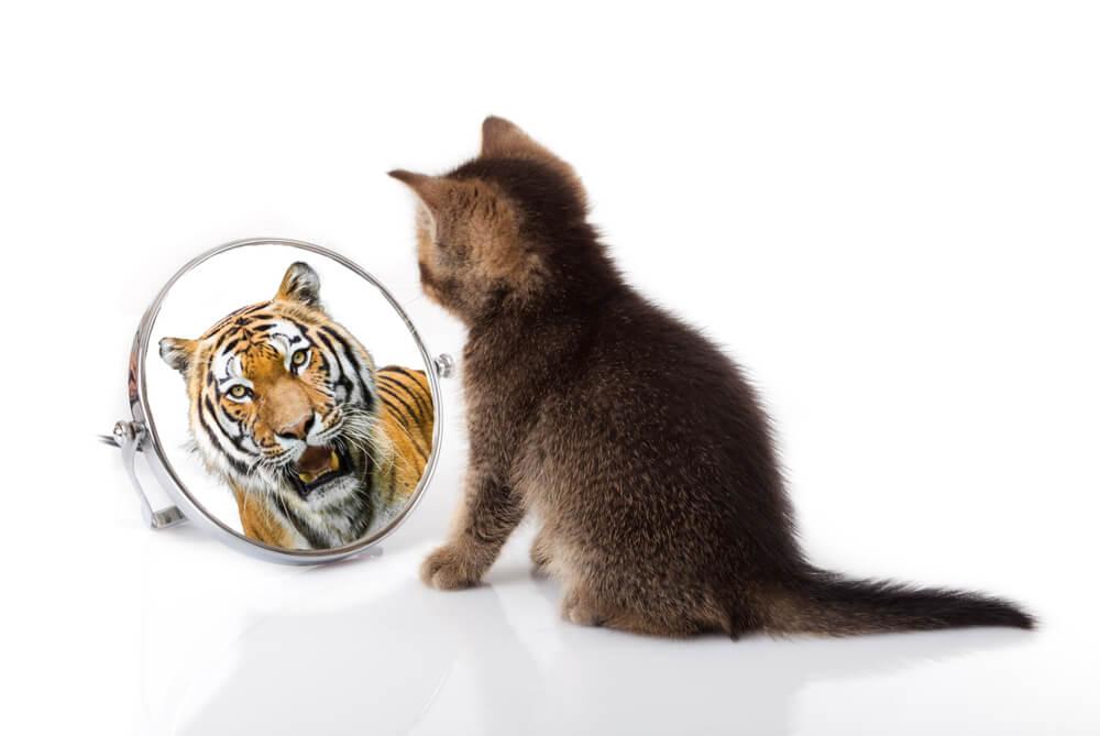 Parecidos entre gatos y tigres