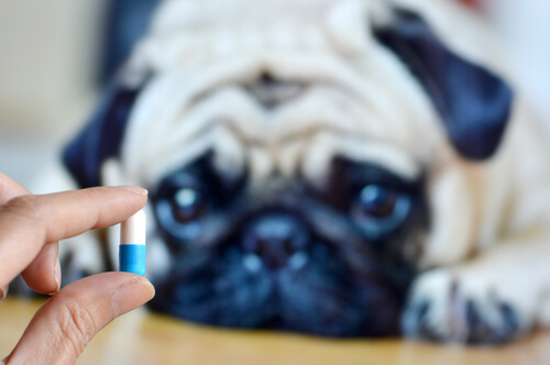 6 maneras de darle medicina a tu perro sin que lo note