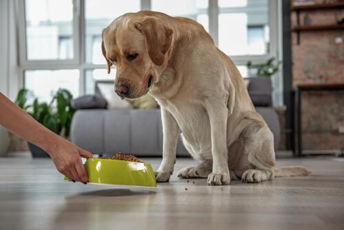 Síntomas para detectar el estreñimiento en nuestro perro