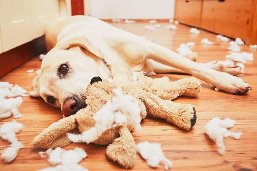 6 problemas comunes de comportamiento de los perros