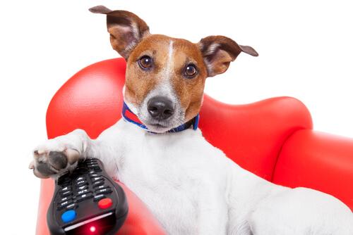 Perro viendo la televisión