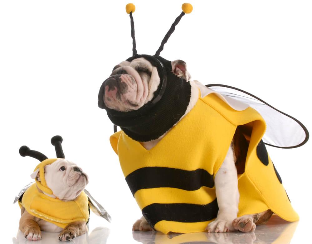 Tips para elegir un disfraz para tu perro