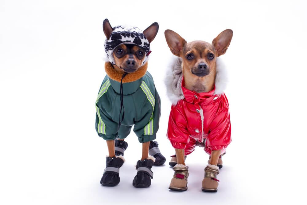 Perros disfrazados.