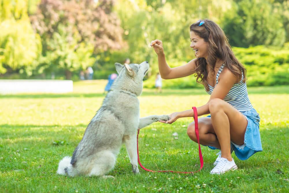 Planear la educación de tu perro.