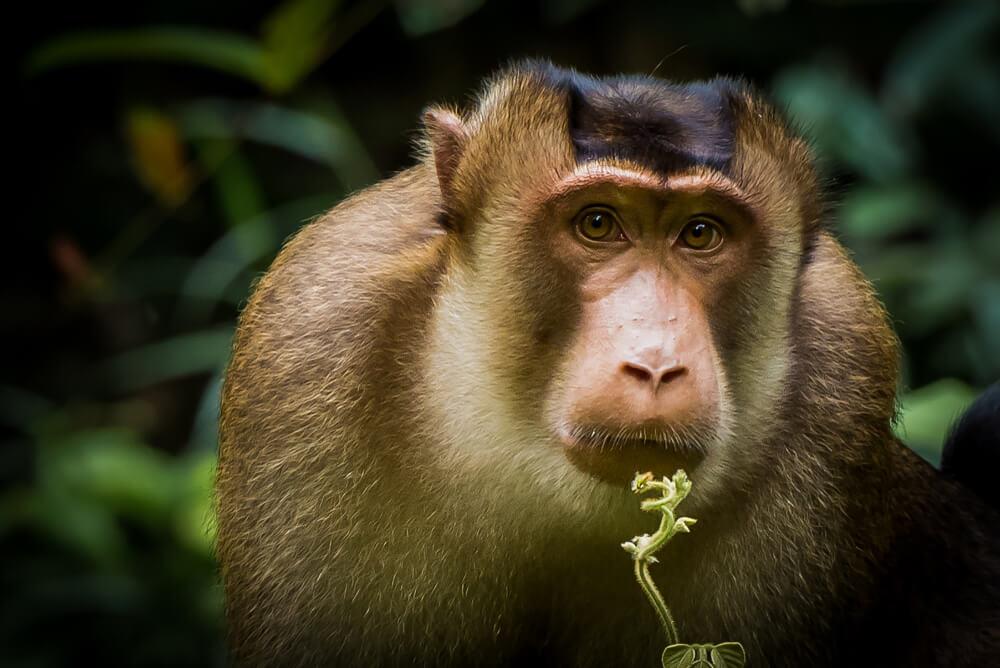 Los primates de China podrían desaparecer