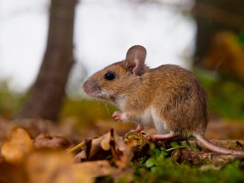 ¿Qué son y para qué sirven las feromonas en el mundo animal?