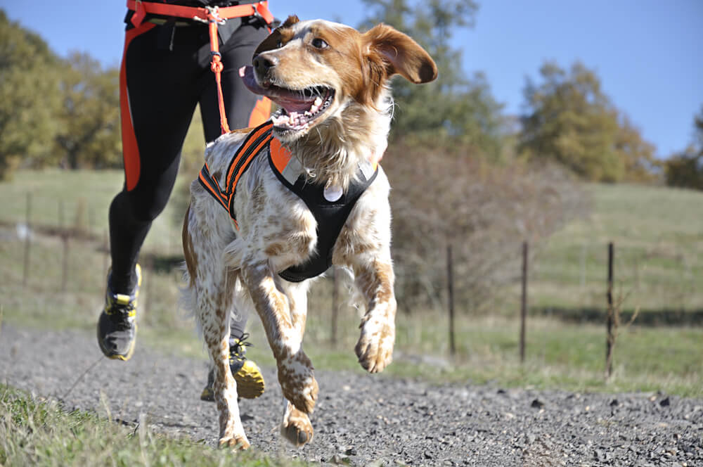 ¿Cuáles son los perros más deportistas?