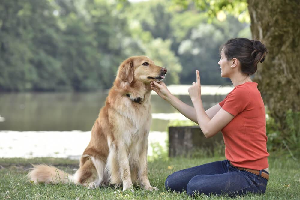 Refuerzo positivo para perros.
