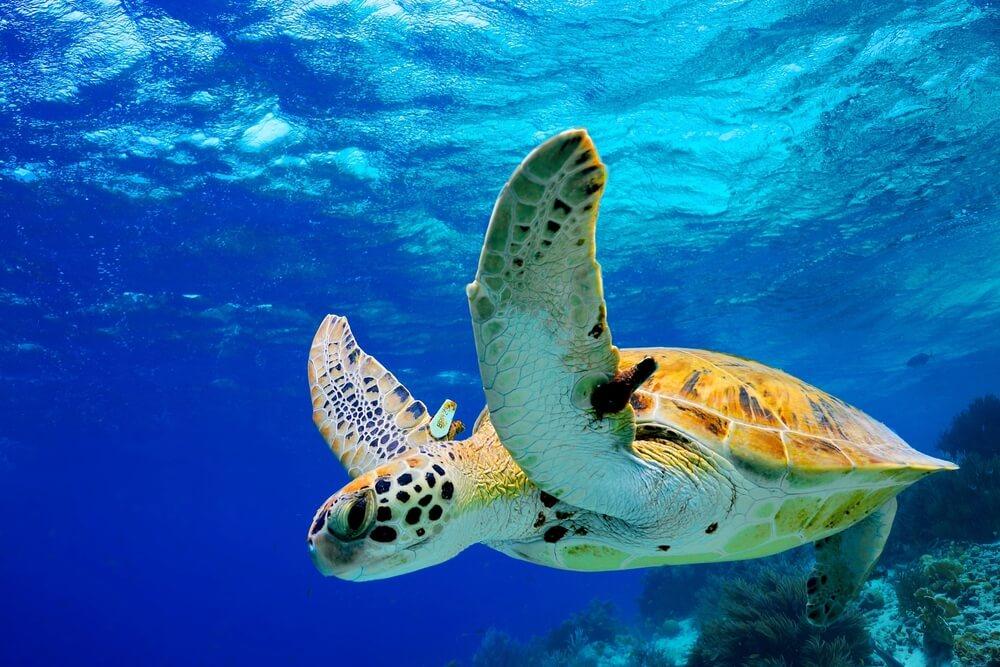 Animales en peligro de extinción en Centroamérica