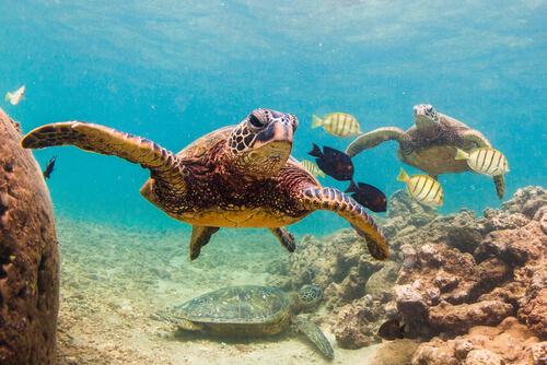 ¿Un mundo sin tortugas?