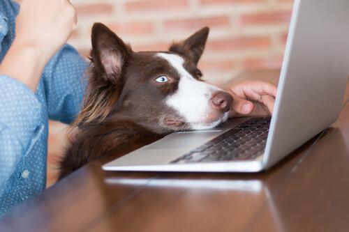 Trabajar con tu perro en casa