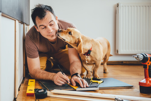 Ya se puede trabajar con tu perro en Tailandia