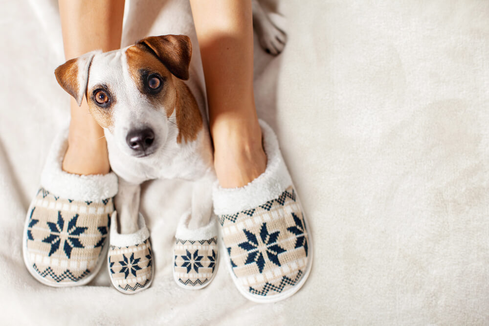 Cómo mantener caliente a nuestra mascota en invierno