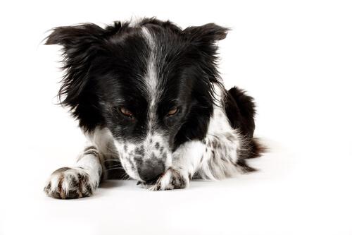 Acicalamiento excesivo en perros: cómo prevenirlo y tratarlo