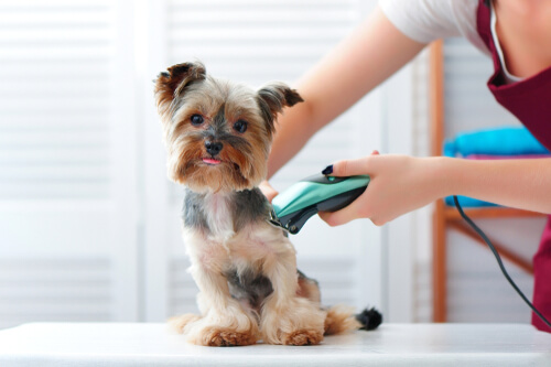 Afeitadora para perros