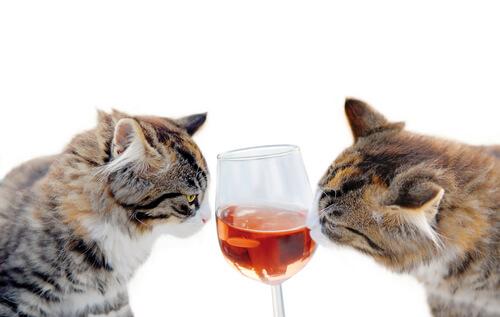 Никогда не давайте алкоголь своей кошке