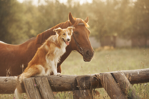 Combatir la artrosis en perros y caballos: las células madre
