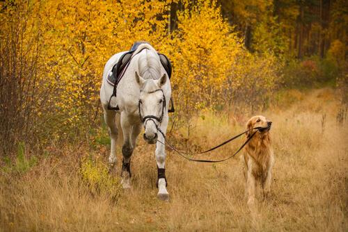 Борьба с остеоартрозом у собак и лошадей: стволовые клетки