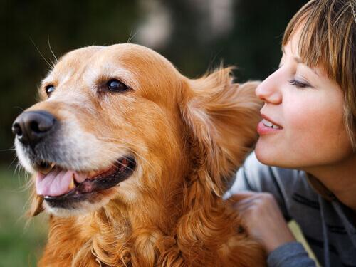 Как собаки обрабатывают слова людей?