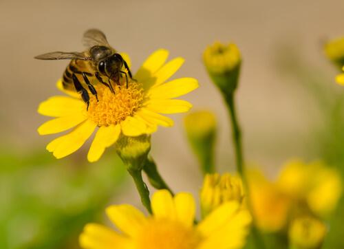 Abejas: cómo se hace y se recolecta la miel