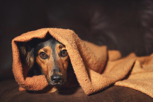 El comportamiento compulsivo en tu mascota