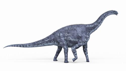 Dinosaurios herbívoros: Cetiosaurus