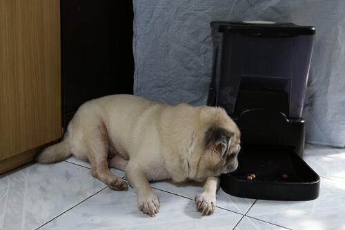 Dispensadores de comida para perros