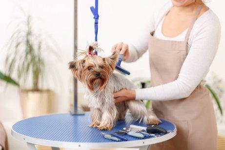 Eliminar los pelos de perro de tu casa