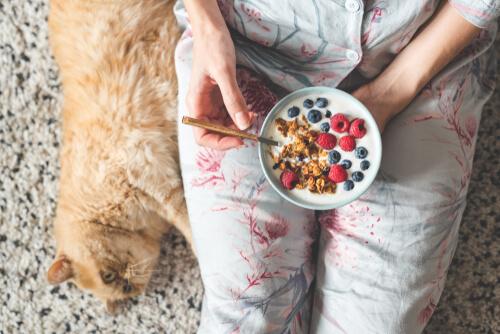 Frutas que pueden comer los gatos: arándanos