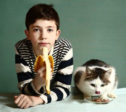 Откройте для себя фрукты, которые могут съесть кошки