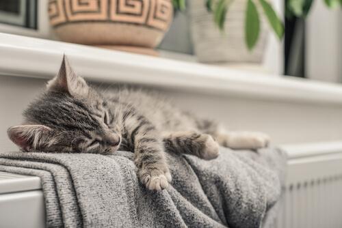 ¿Los gatos perciben las energías de las personas?